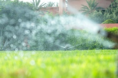 How Much Water Does Your Lawn Need During a Florida Winter?