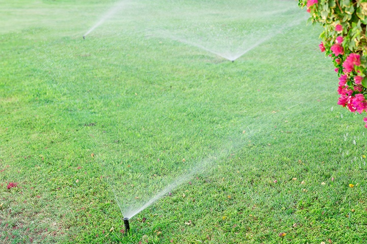 Winter Irrigation Tips for Florida Homeowners